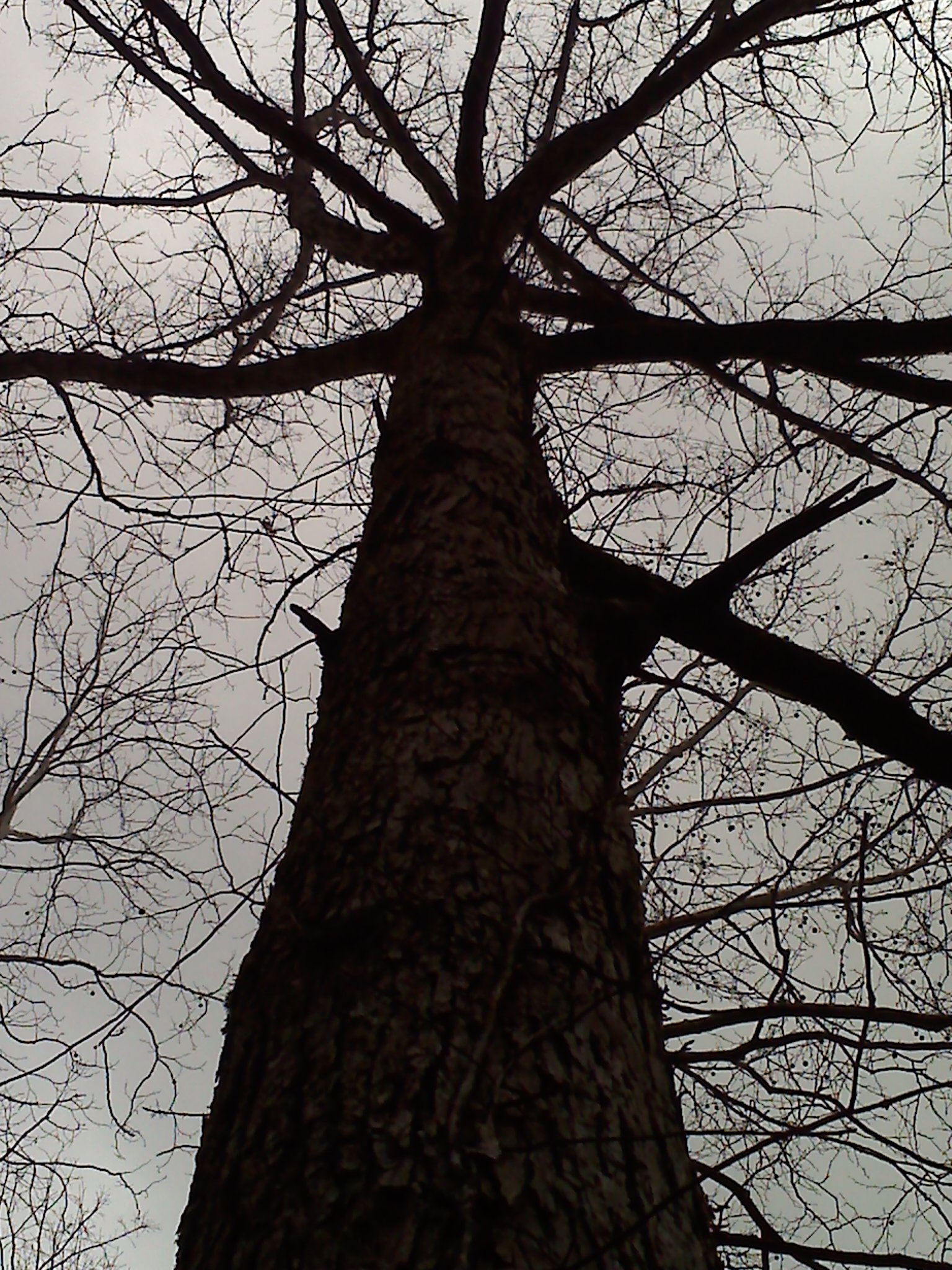 Bleak Tree